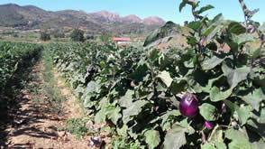 Azienda Agricola Mercati marco